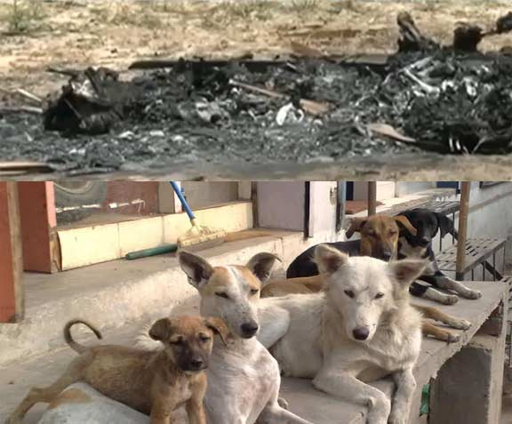 Dogs killed in chennai
